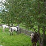 Mittagspause für Pferd und Reiter