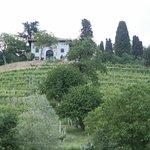 die Weingärten hinter dem Weingut