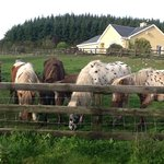 Ponies at Hillview Farm House B&B