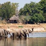 Elephants outside Nsefu