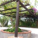 la fontana delle ninfee