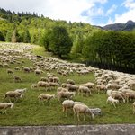 Enkele schaapjes in de wei honderd meter van het hotel