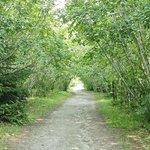 The trail to Yakutania