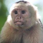 A local monkey