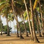 Playa del Palapa