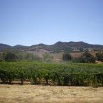 Sanford vines