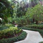 Gardens between buildings