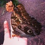 las mariposas se paran en tus manos si les das comida