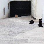 La team de chat errants du voisinage (bloc A/B, méfiez-vous)