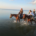 Horses on the beach!