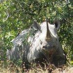 Rhino - Black