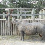 Baraka - blind Black Rhino