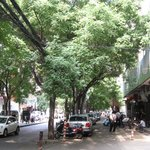 Lots of street trees in Old Xian