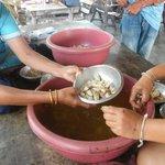 Preparing sea cicadas