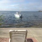 watch dolphins play from your patio!