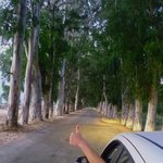 Ausflug, Eukalyptus-Allee bei Akyaka