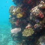 Reef at Ratua Island