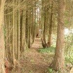 Creacon Lodge Woodland Walk