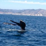 Incredible whale watching that day!
