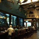 Huge fish tank!