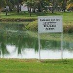 Crocodile habitat on golf course!