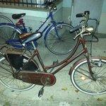 """Biciclette """"da tetano"""""""