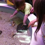 Touch tank in the nature center
