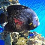 One of many beautiful fish at the aquarium