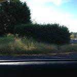 Overgrown exterior