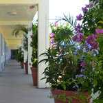 Americas Best Value Inn Bradenton Flowers