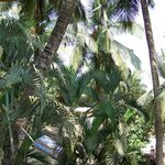 Coconut trees and green grass with chairs to lounge all evening.