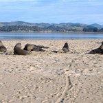 sealions on beach