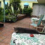 Jerry - the best florida cat!
