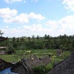 Aussicht von unserem Zimmer auf die Reisfelder