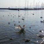 Swan lake, literally!
