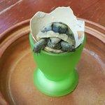 Oscar the turttle newborn :-)