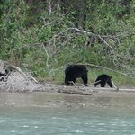 Plenty of wild life to see, here a black bear and 3 cubs.