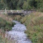 River Valley Stream