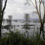 View over Lake Naivasha.