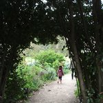 Thru the arch and into the secret garden?