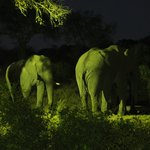 Elephants at Night across the river at the Waterhole