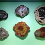 Glenbow 1 - Fossilized tree sections