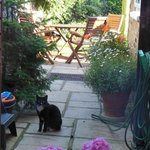Breakfast view of garden with kitty