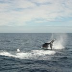 Whale 2 10 Sept 2013