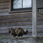 Cat #1 (seemed like the alpha)