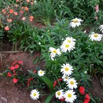 Lovely flowers in garden