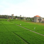 The paddy field outside of the hotel