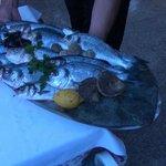 Der Fisch, exzellent und frisch
