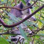 The Lemur Enclosure.