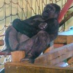 In the Gorilla house.